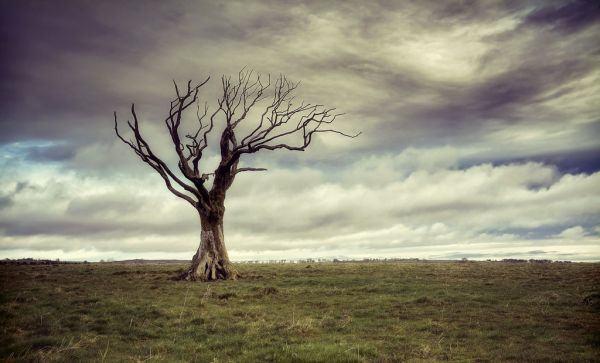 Mê mẩn với 999+ ảnh đẹp thiên nhiên sắc nét nhất trên thế giới