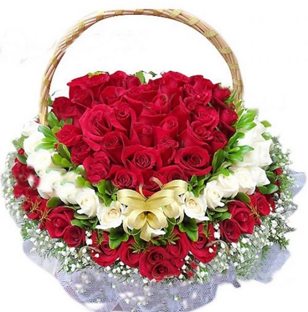 1234+ ảnh hoa hồng đẹp lãng mạn nhất không thể nào bỏ lỡ