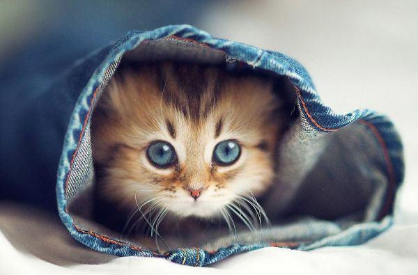 Gửi tặng 1000+ hình ảnh mèo dễ thương và đáng yêu nhất đến bạn đọc