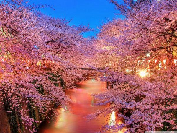 1000+ hình nền hoa đẹp chuẩn 4k HD gửi tặng bạn đọc